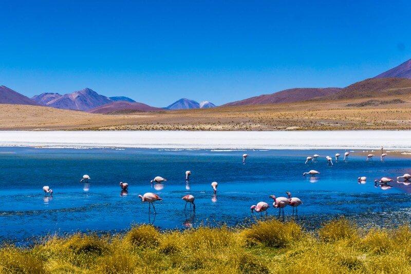 Flamingo lake RF