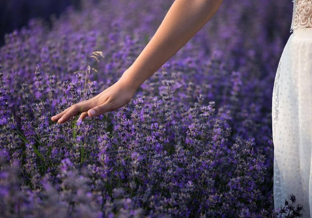 Lavender farm RF