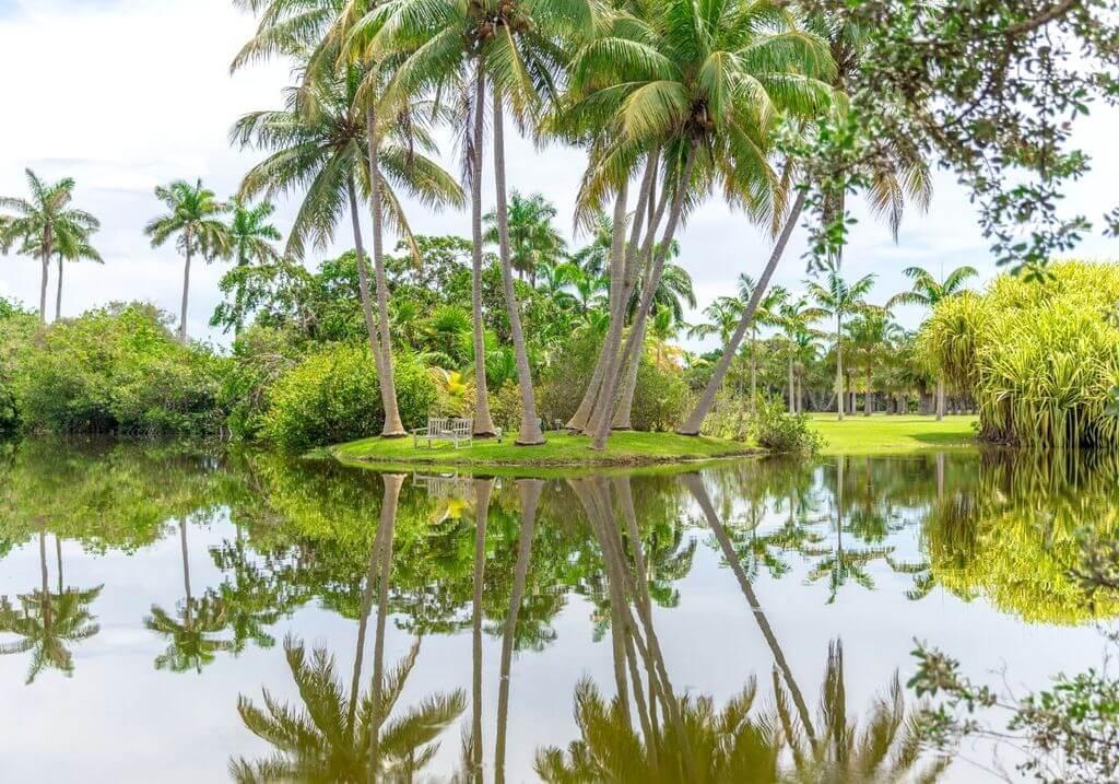 Fairchild Tropical Botanic Garden Palm Tree RF