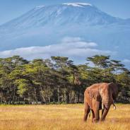 Planning a Vacation to the Highest Mountain in Africa: Mt Kilimanjaro
