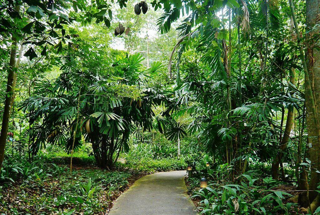 1280px-Singapore_Bukit_Timah_Nature_Reserve_5