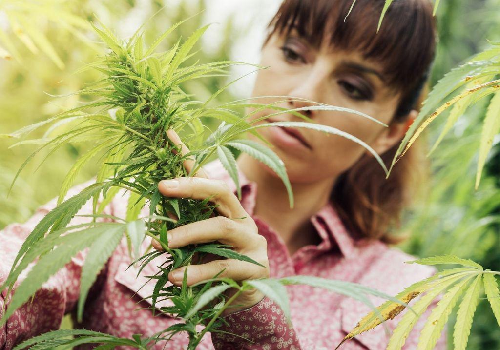 Hemp flower woman RF