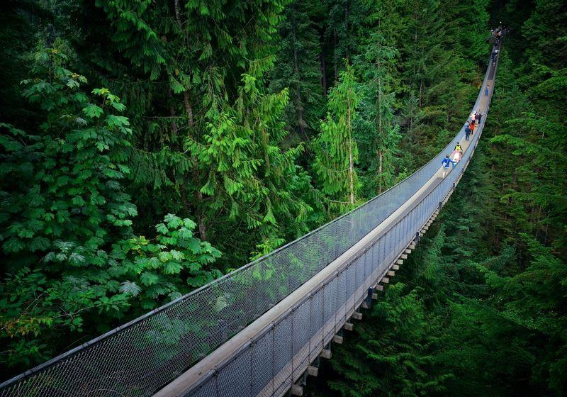Vancouver suspension bridge forest walk RF