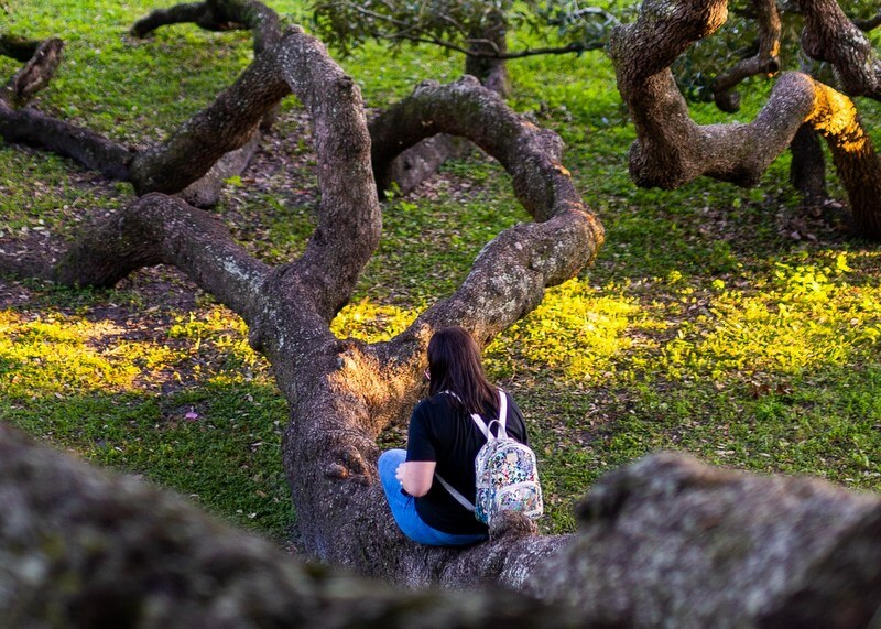 Tree woman female RF