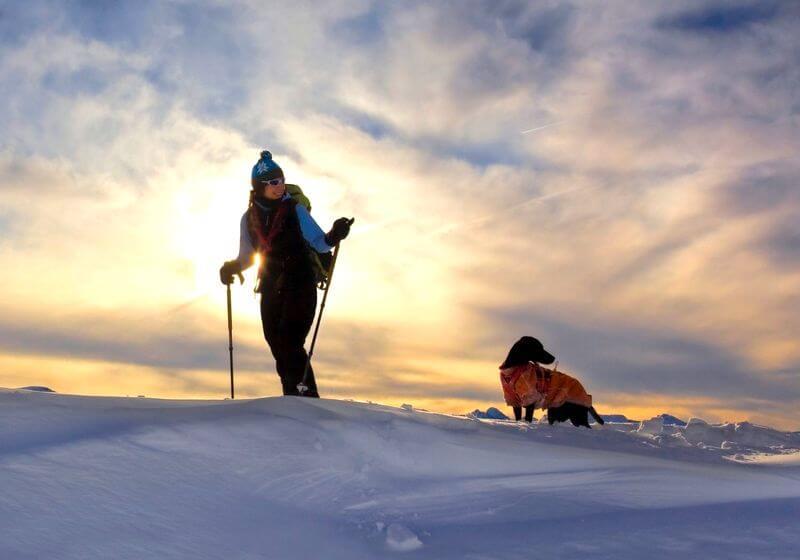Snowshoeing winter dog RF