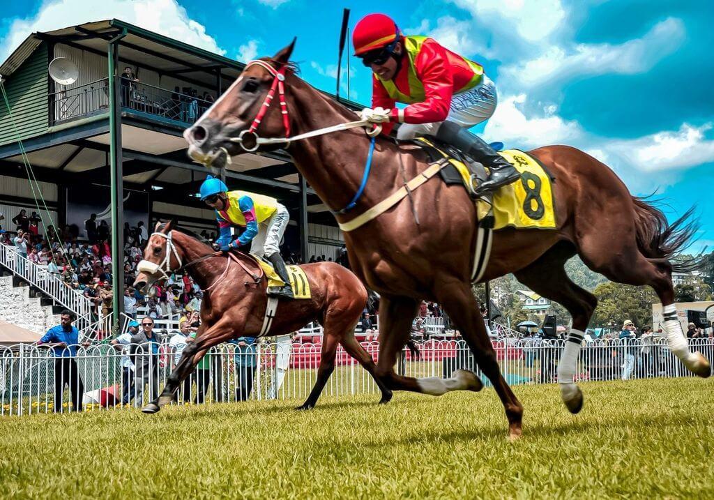 Horse Racing RF