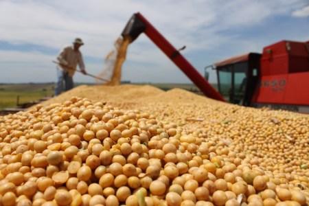 INTA Oliveros cosecha de soja
