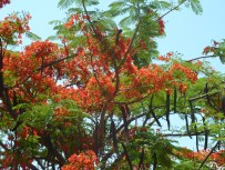 The colours of nature in Nkhata Bay