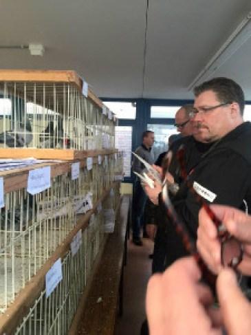 duiven keuren met Roland Kop