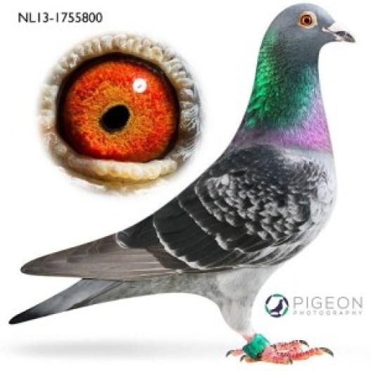 NL13-1755800 Odin verkleind