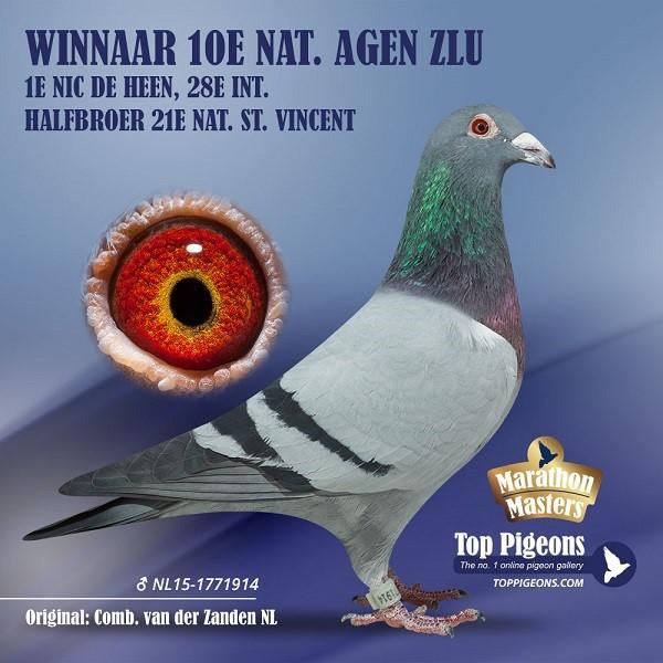 Jan van der Zanden Scherpenisse moet afstand doen van zijn duivenkolonie (deel 3 en slot)