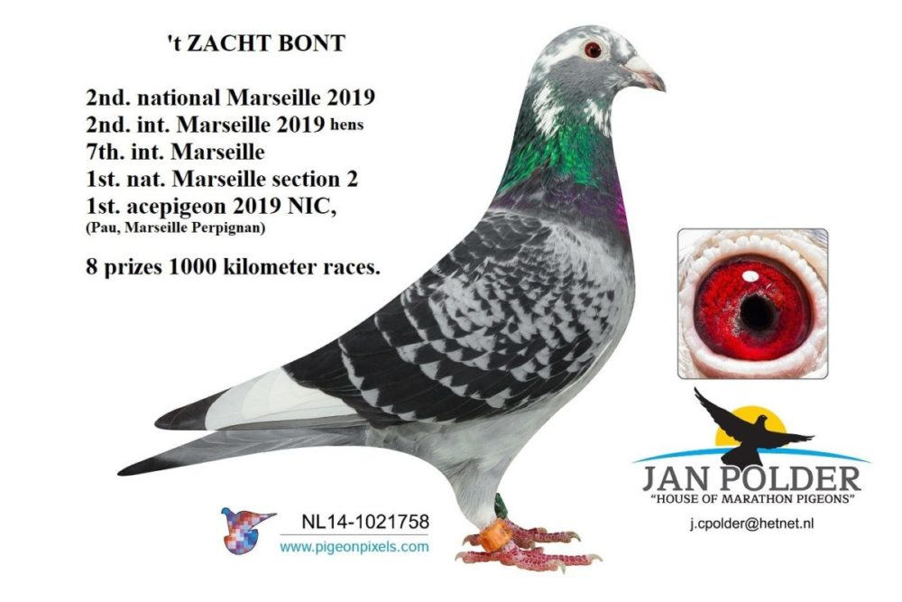 Toppers van 2019 … van Marseille van Jan Polder