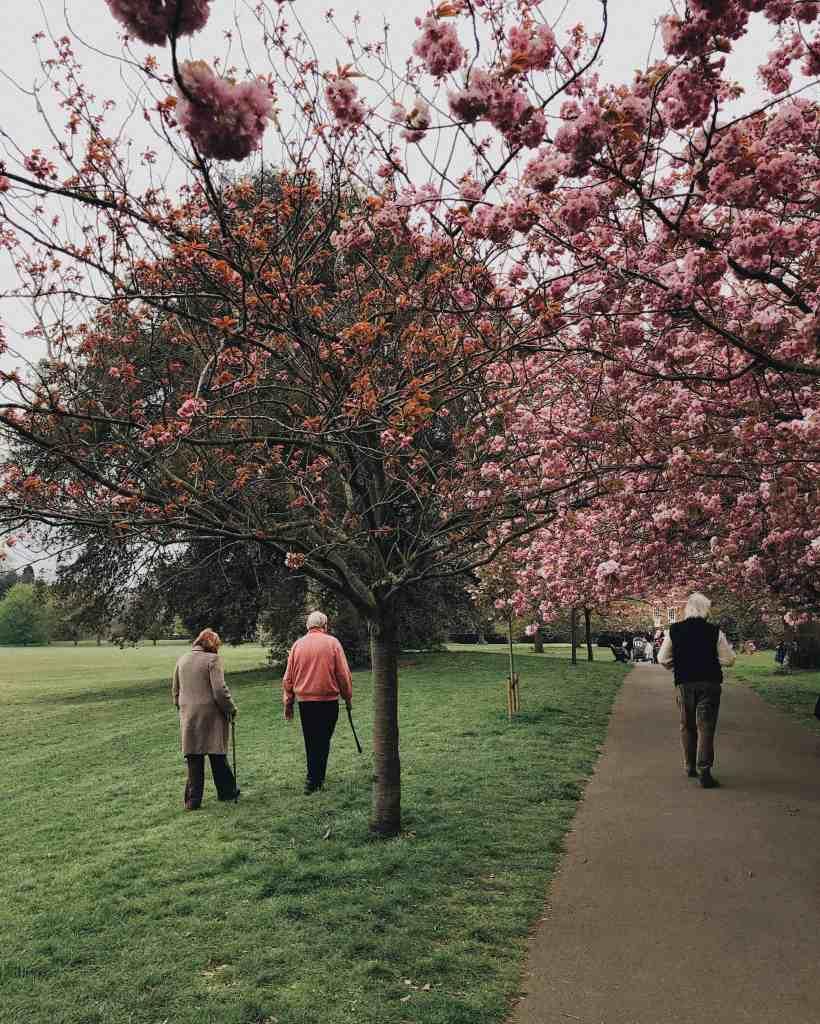 Elderly people walking in a park.