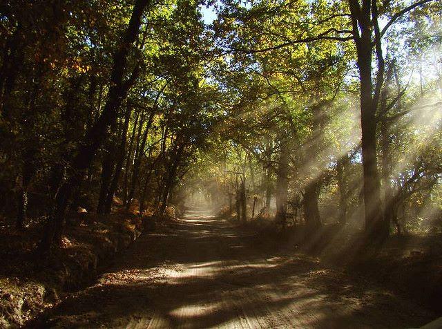A beleza da floresta Gerês