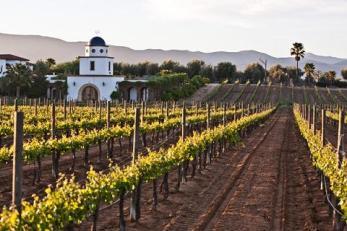 ruta del vino 4