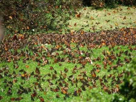 santuario mariposa monarca