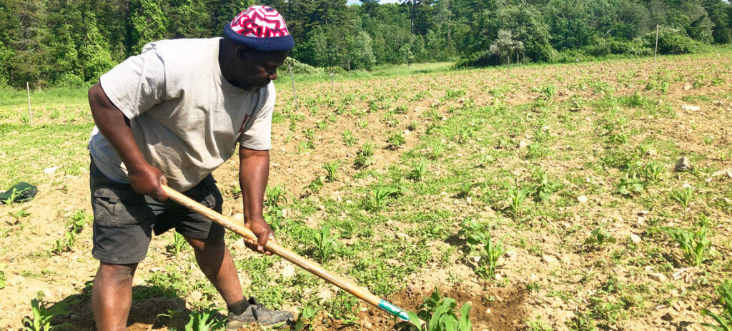 Farmers can grow their own crops on one tenth of a hectare of land