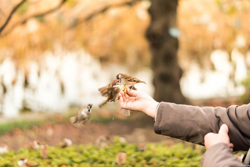 上野公園 雀