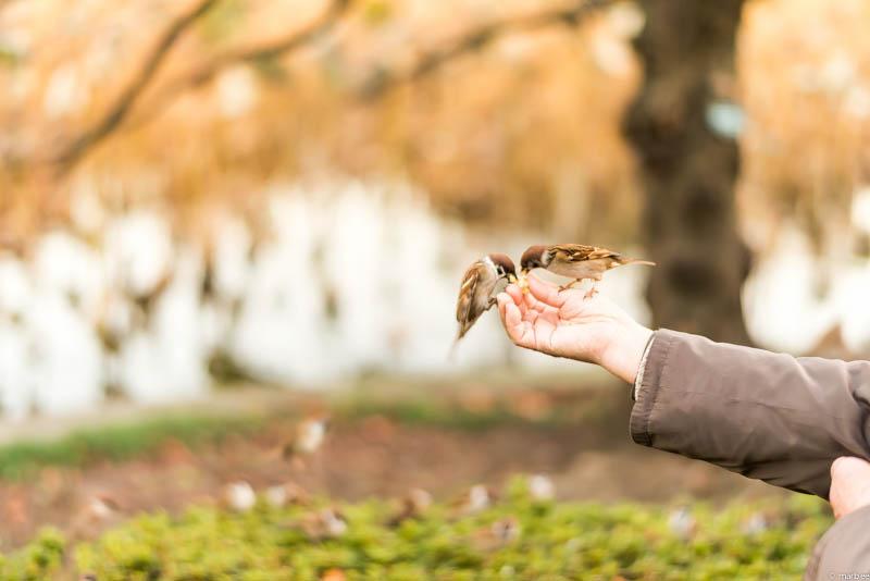 雀を餌付けするオジサン