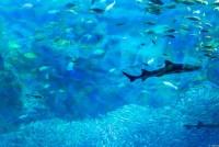 江ノ島水族館 鮫さん