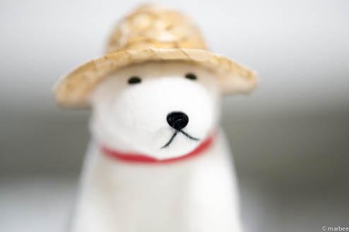 お父さん犬ISO200