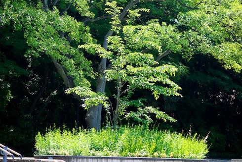 港の見える丘公園入り口の木
