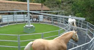 Imagen del caminador de este centro hípico para que los caballos se ejerciten. FOTO/ El Repique