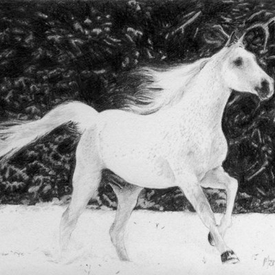 Horse in Snow, Pencil on Paper, 15cm by 10cm. (2010)