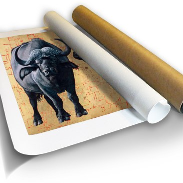 African Buffalo – Archival Canvas Print in a Tube