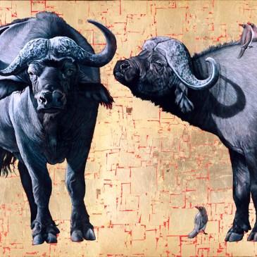 Marc Alexander | African Buffalo