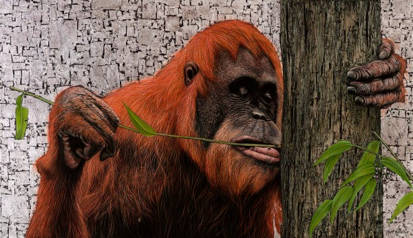 Marc Alexander | Sumatran Orangutan | In The Balance