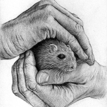 Marc Alexander | Hamster | Touch Series