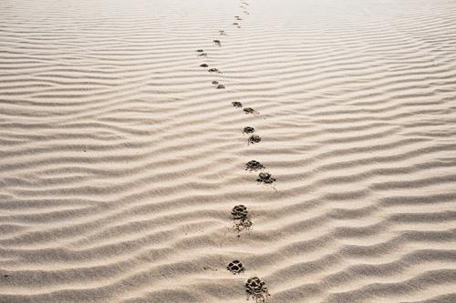 Caminhos são feitos andando, não esperando: uma lição que esquecemos em tempos difíceis