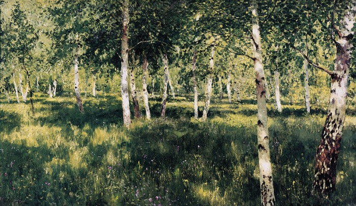 birch forest 700x406 %picture