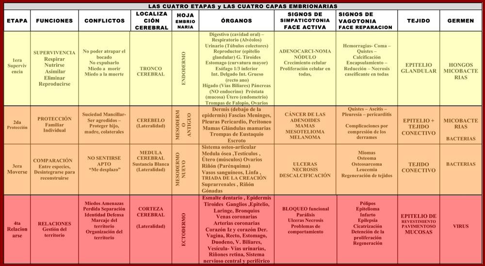 TABLA DE LAS CAPAS EMBRIONARIAS DE LA NMG DR. HAMER