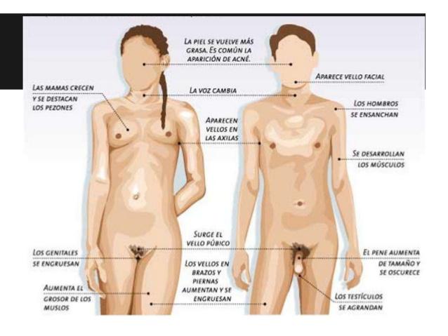 el-cerebro-y-la-conducta-sexual-aparato-reproductor-femenino-y-masculino-8-638