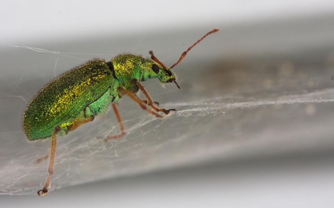 Insecten #1