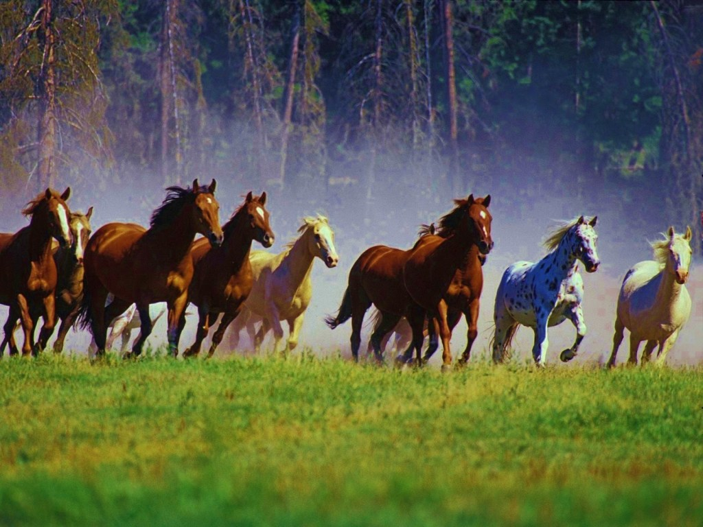 blog if wishes were horses beggars would ride