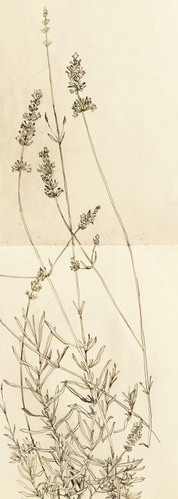 Gioia Marchegiani - Botanical