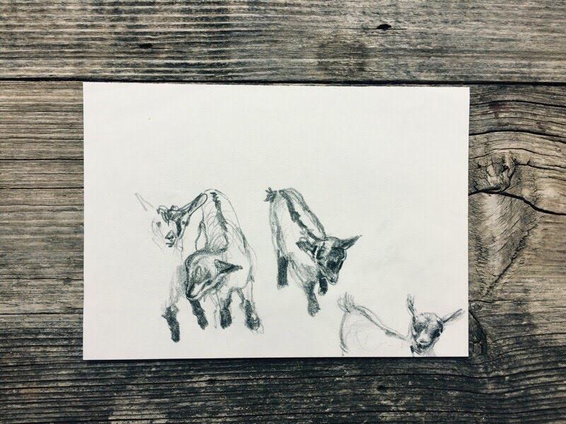 Gioia Marchegiani - Workshop disegno Montagna