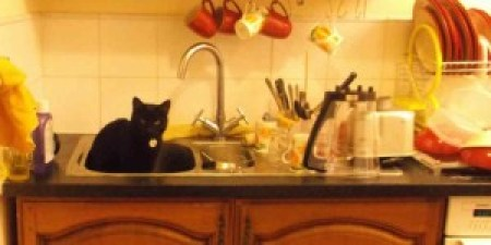 """""""I can't do the dishes because my cat sits in the kitchen sink."""""""