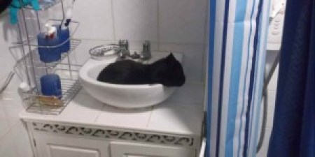 """""""I can't clean the bathroom because my cat lies in the wash basin."""""""
