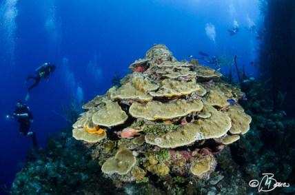 """Outer reef - Little Cayman """"Randy's gazebo"""""""