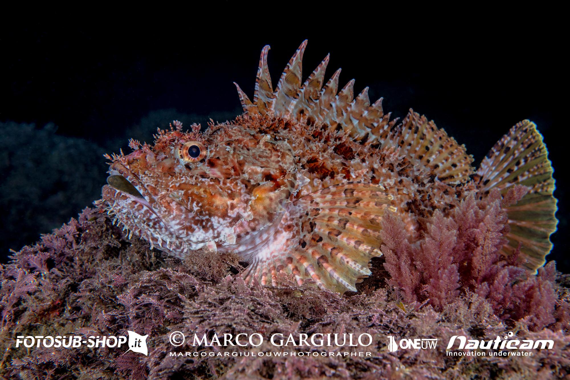 23 Marina Grande – Immersione Notturna