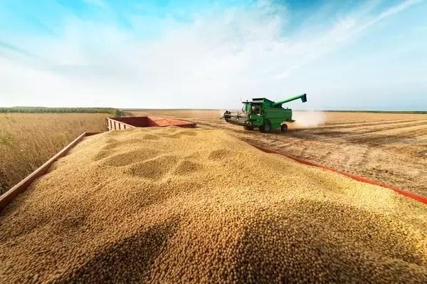 Soja: colheita brasileira atinge 22,5% da área, diz Safras