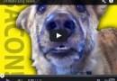 Il primo cane che parla…. 0.0