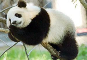 chongqing-zoo