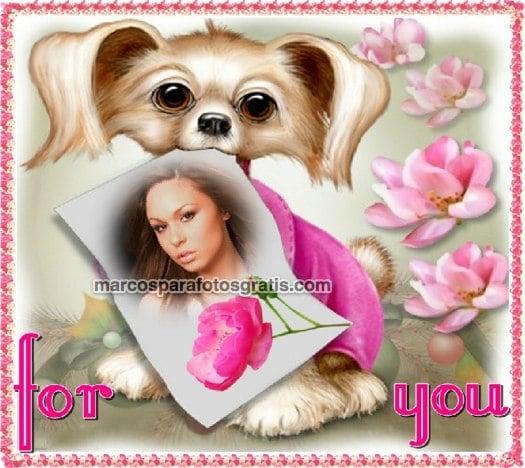 marcos de fotos de perritos