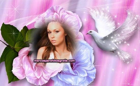 marcos de fotos de paloma y flores