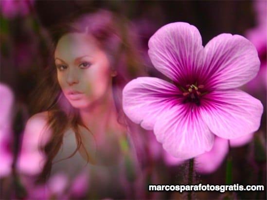 Marco con bonita flor rosada